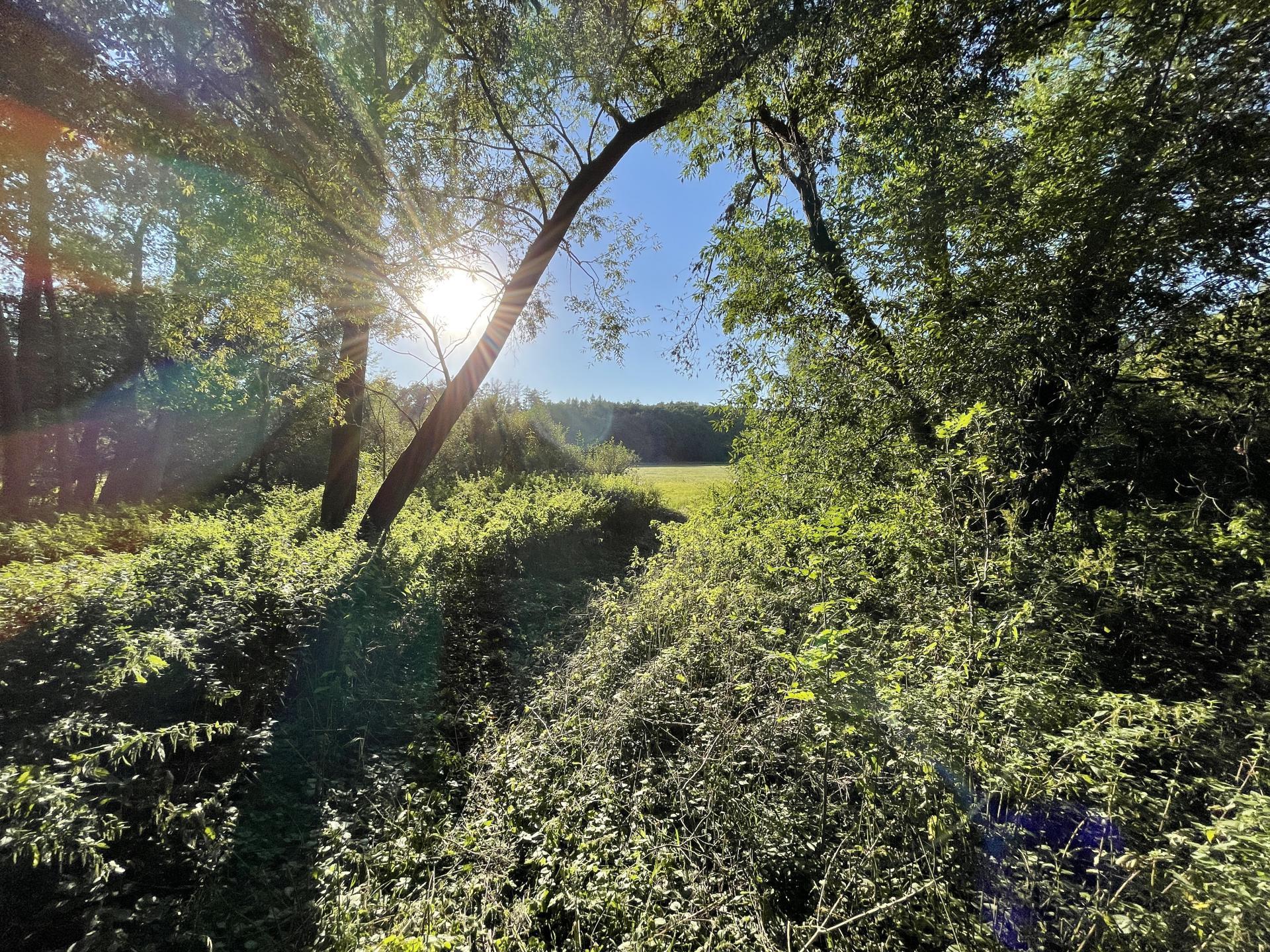 Prodej pozemku Hrušová / Vysoké Mýto